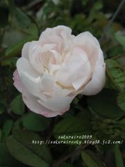 KIF_9599-1.jpg