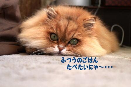 201111014.jpg