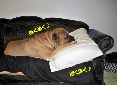 枕ゲットです♪