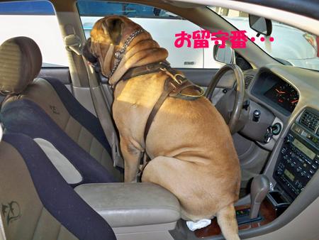 車内ガード中