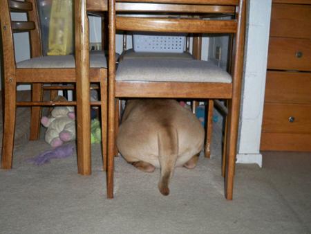 テーブルの下にジャストフィット(笑)