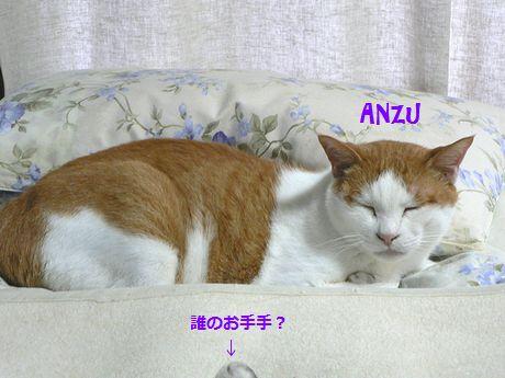anzugure12.jpg