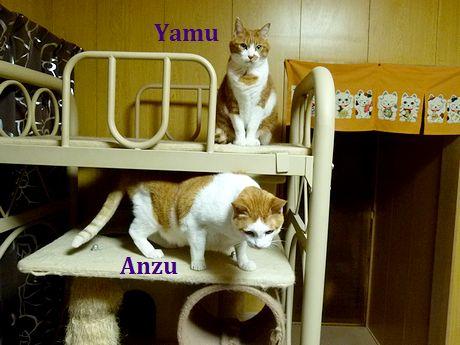 anzuyamuyamu1_20120217201603.jpg