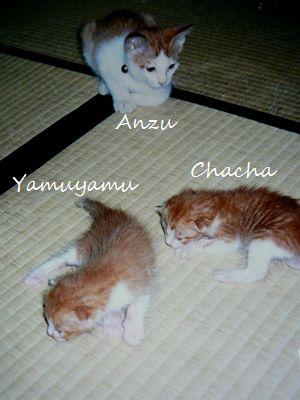 anzuyamuyamucyacya4.jpg