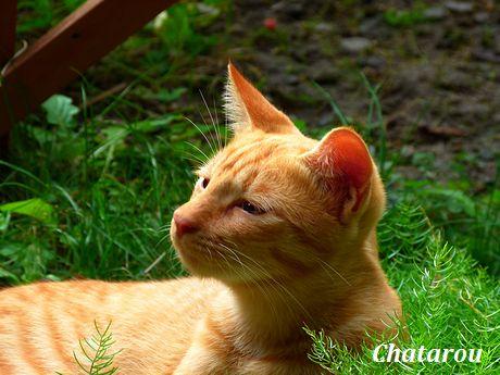 chichibi112.jpg