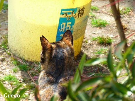 chichibi118.jpg