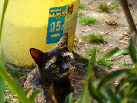 chichibi119.jpg