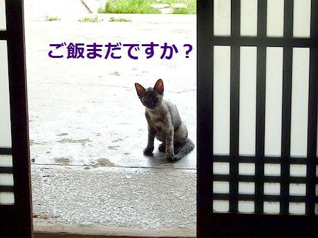 chichibi35.jpg