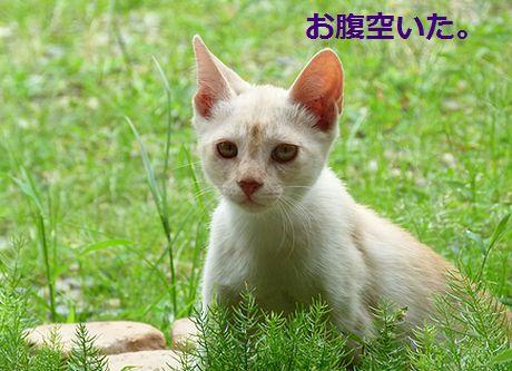 chichibi36.jpg