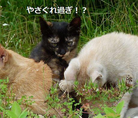 chichibi7.jpg