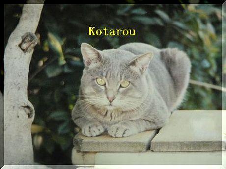 kotarou1.jpg