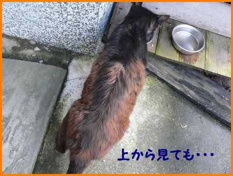 ku-cyan2_20120326002132.jpg