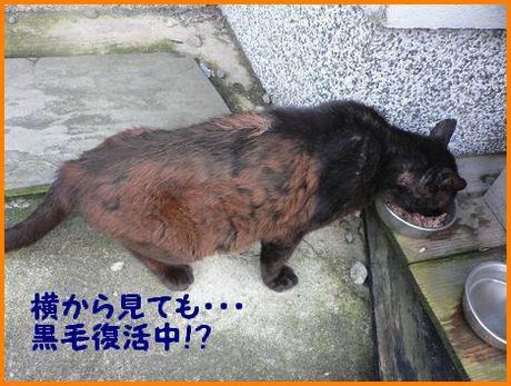 ku-cyan3_20120326002132.jpg