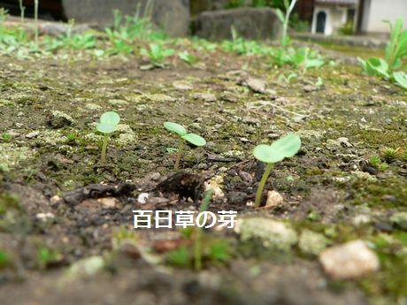 niwa201.jpg