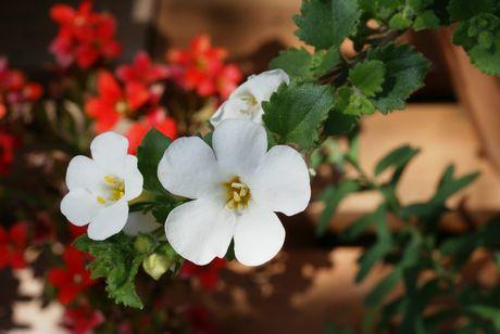 niwa28_20110523230326.jpg
