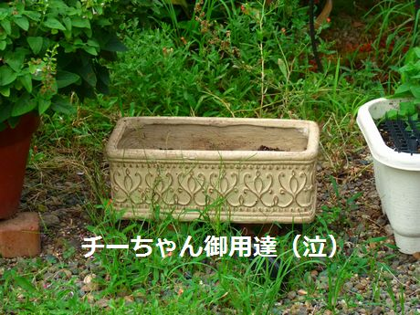 niwa33_20110701182333.jpg