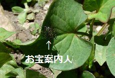 niwa7_20110711003714.jpg