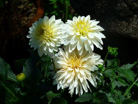niwa8_20110711003714.jpg