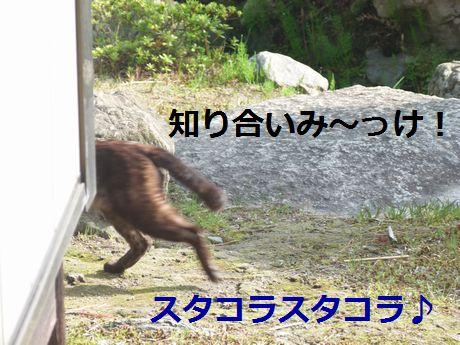 ponchan6.jpg