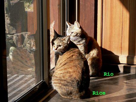 ricerio2.jpg