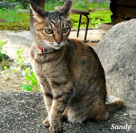 sandy6_20111123150226.jpg