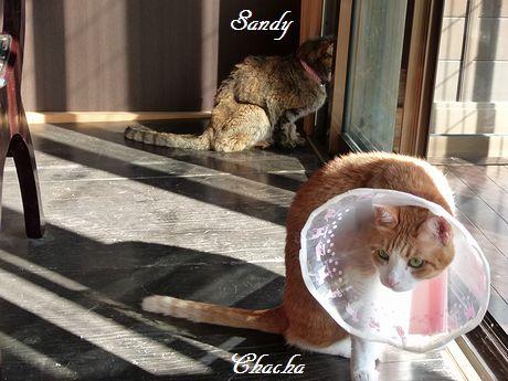 sandycyacya2.jpg