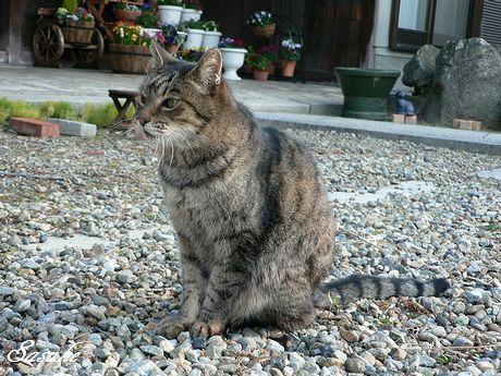 sasuke2_20110401000544.jpg