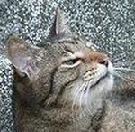 sasukeblog.jpg