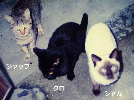 shamukurojapp1.jpg