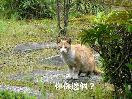 taneko1_20100513183923.jpg