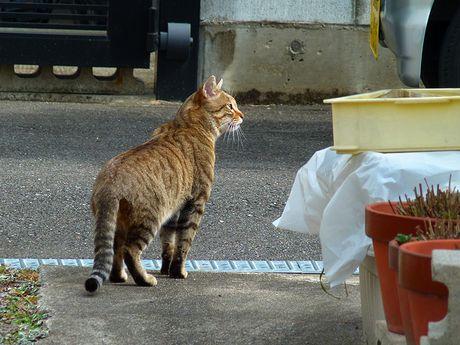 taneko2_20120216130141.jpg