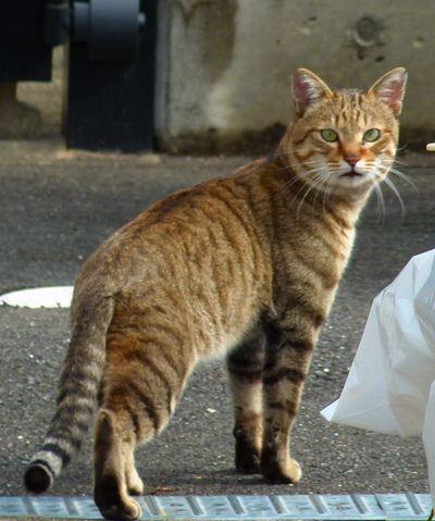 taneko3_20120216130141.jpg