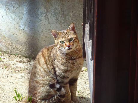 taneko5_20120315132055.jpg
