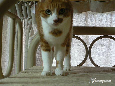 yamuyamu34_20101107103012.jpg
