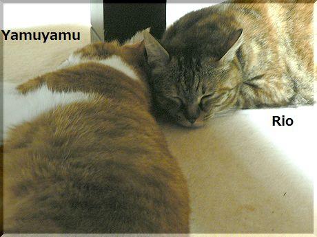yamuyamurio1.jpg