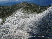 17 大普賢にて、樹氷の森と阿弥陀ヶ森