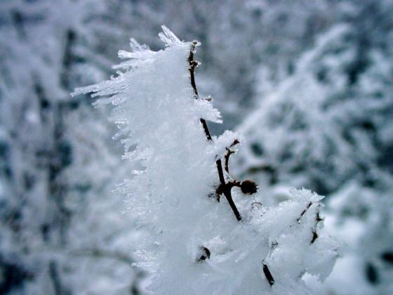 04 樹氷の結晶