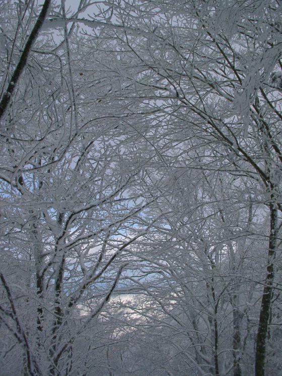 10 樹氷