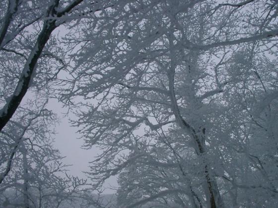 09 樹氷