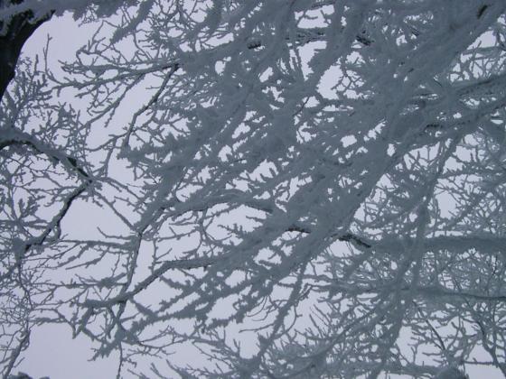 08 樹氷