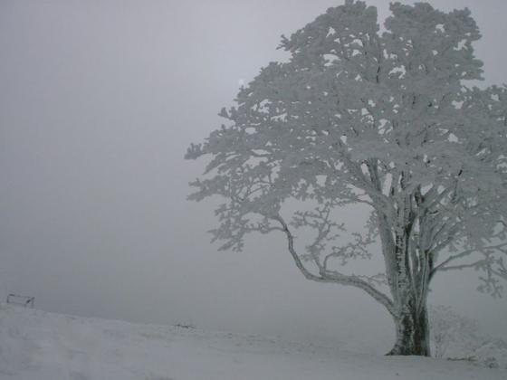 14 樹氷と白い太陽