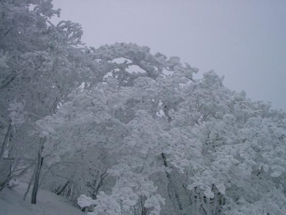 11 樹氷