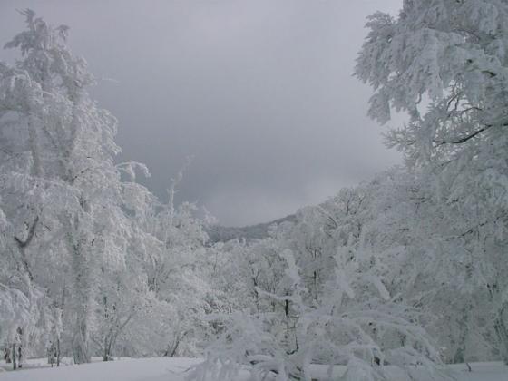 06 樹氷
