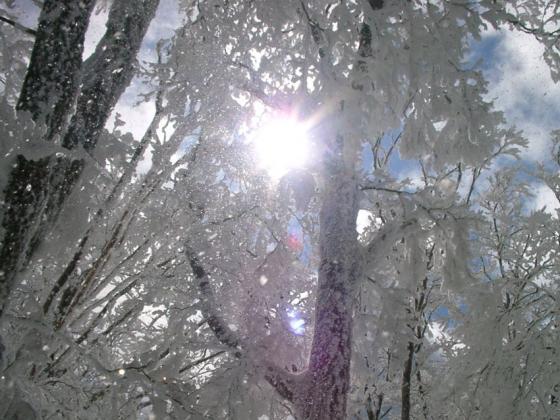 08 乱舞する霧氷