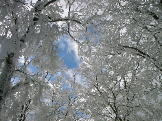 07 樹氷に青空