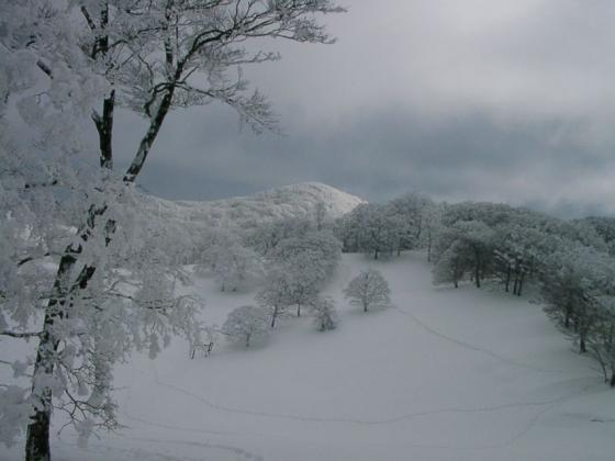 06 雪の上に光と陰