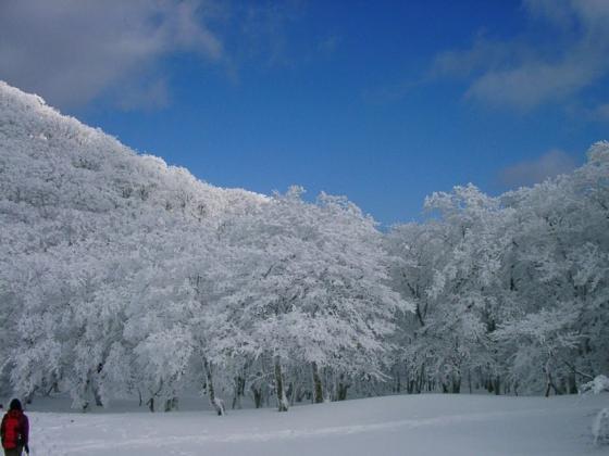 08 白い森