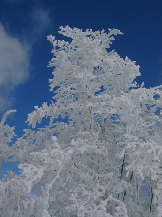 06 樹氷と空