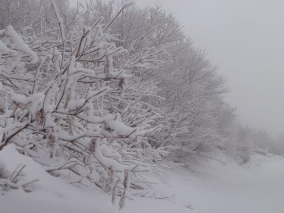 03 カリカリの上に雪