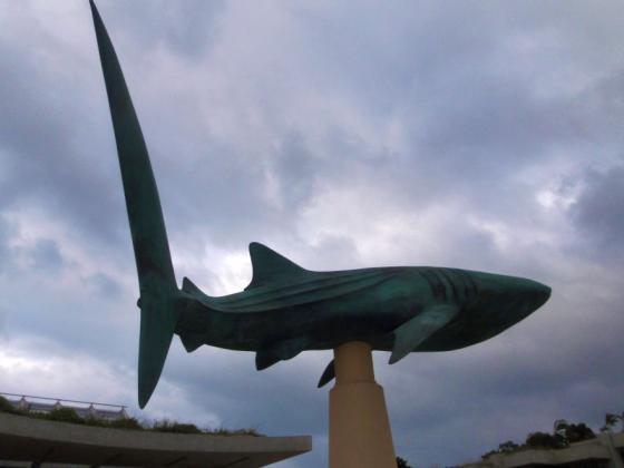 10 美ら海水族館前